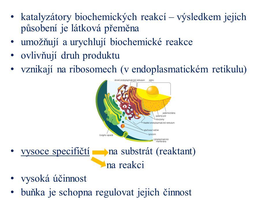 katalyzátory biochemických reakcí – výsledkem jejich působení je látková přeměna