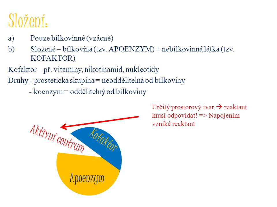 Složení: Aktivní centrum Kofaktor Apoenzym Pouze bílkovinné (vzácně)