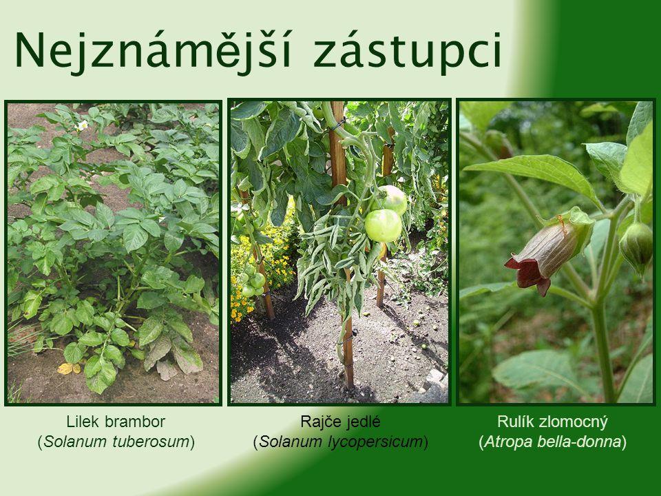 (Solanum lycopersicum)