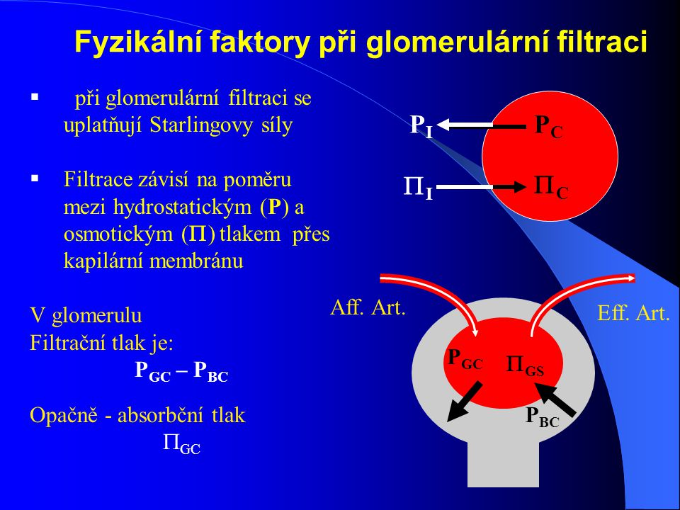 Fyzikální faktory při glomerulární filtraci