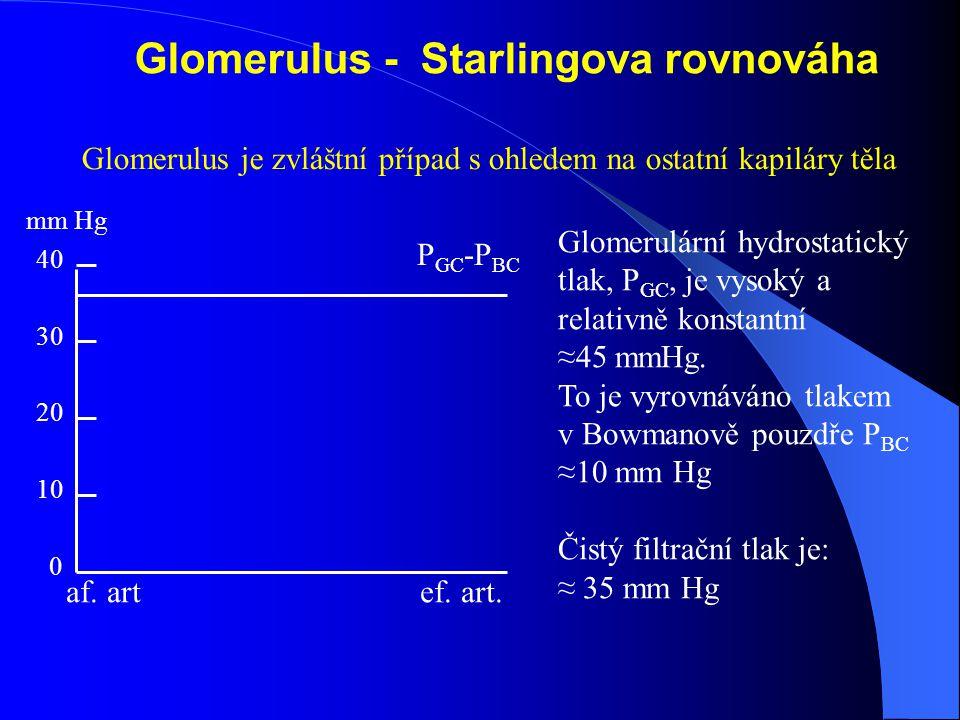 Glomerulus - Starlingova rovnováha