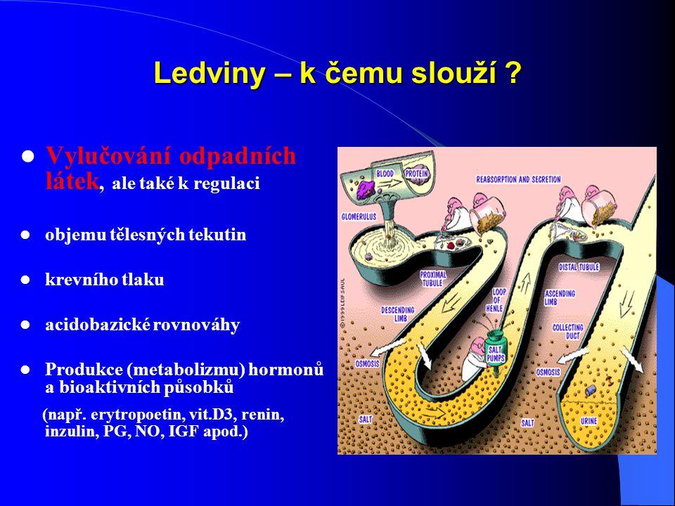 Ledviny – k čemu slouží Vylučování odpadních látek, ale také k regulaci. objemu tělesných tekutin.