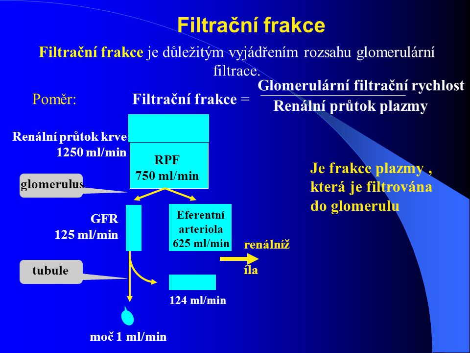 Filtrační frakce Filtrační frakce je důležitým vyjádřením rozsahu glomerulární filtrace. Poměr: Filtrační frakce =