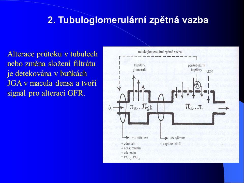 2. Tubuloglomerulární zpětná vazba