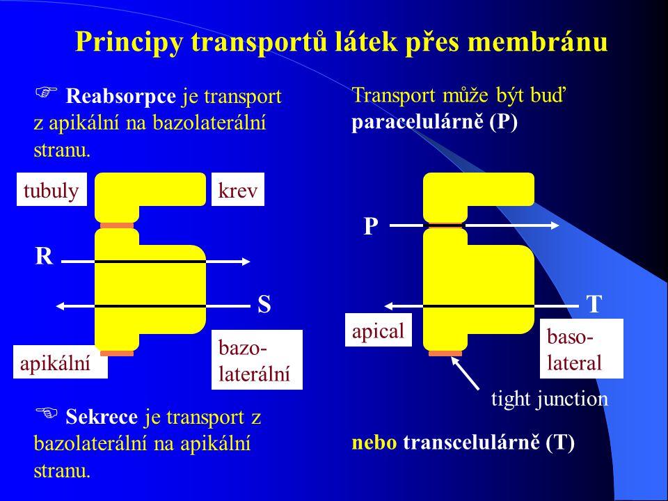 Principy transportů látek přes membránu
