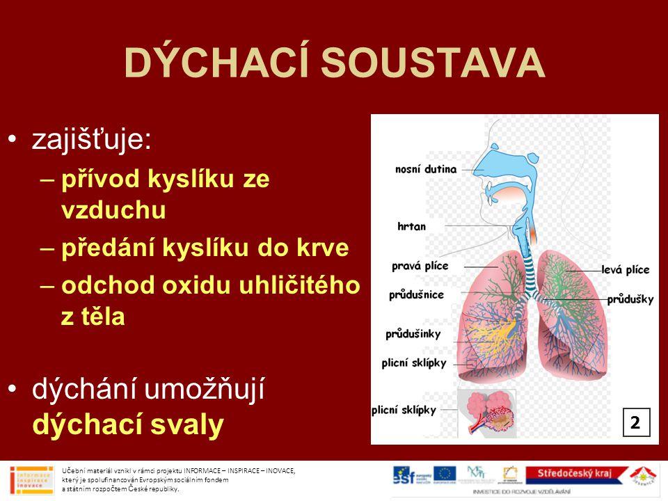 DÝCHACÍ SOUSTAVA zajišťuje: dýchání umožňují dýchací svaly