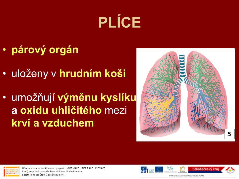 PLÍCE párový orgán uloženy v hrudním koši