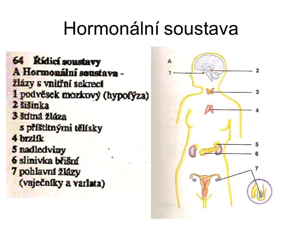 Hormonální soustava