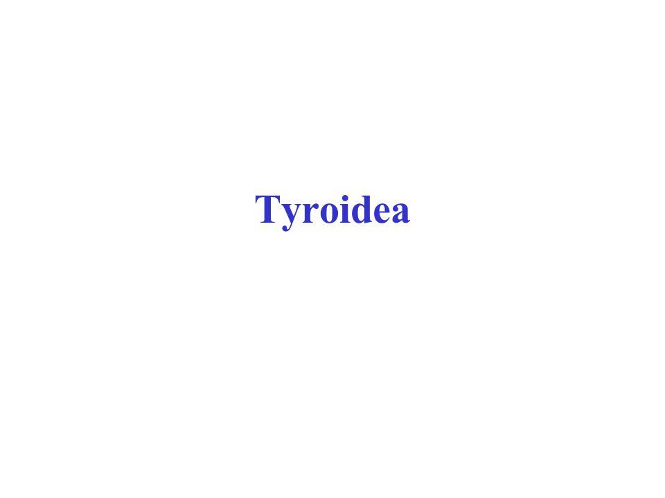 Tyroidea