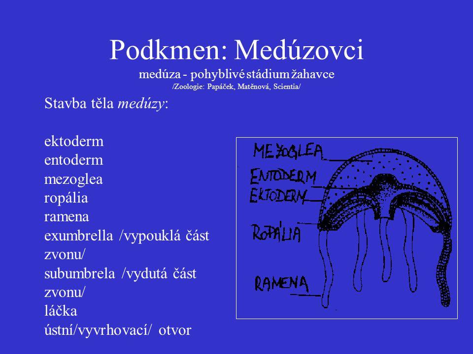 Podkmen: Medúzovci medúza - pohyblivé stádium žahavce /Zoologie: Papáček, Matěnová, Scientia/