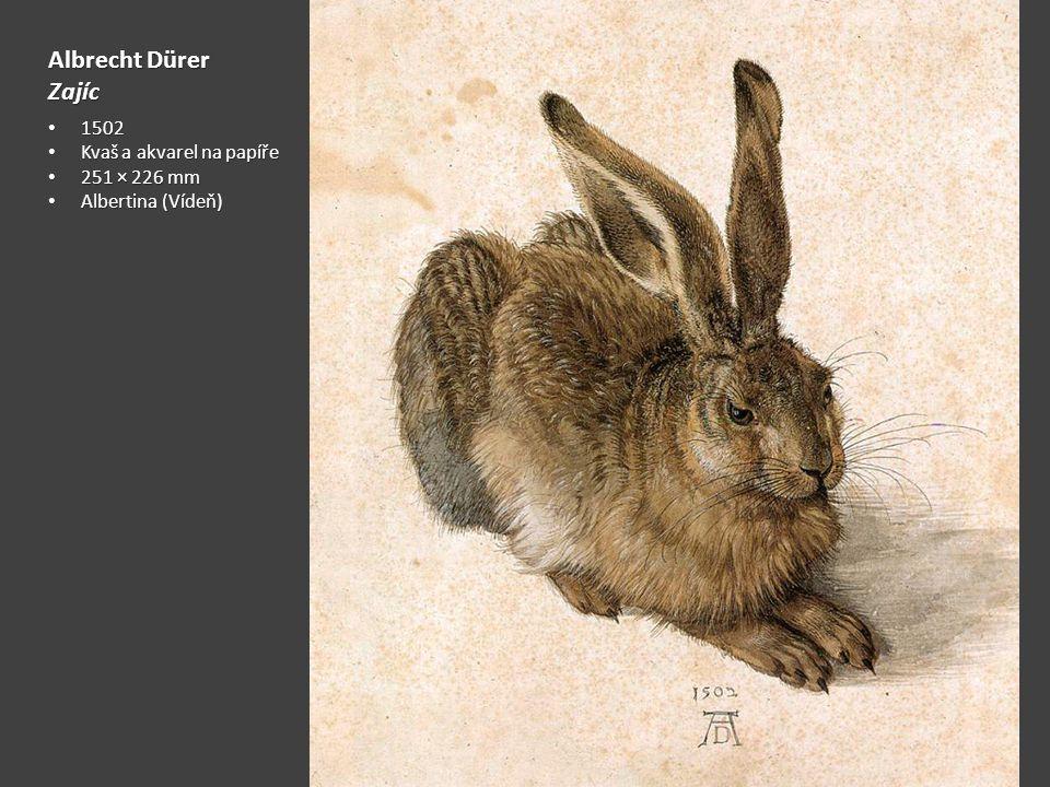 Albrecht Dürer Zajíc 1502 Kvaš a akvarel na papíře 251 × 226 mm