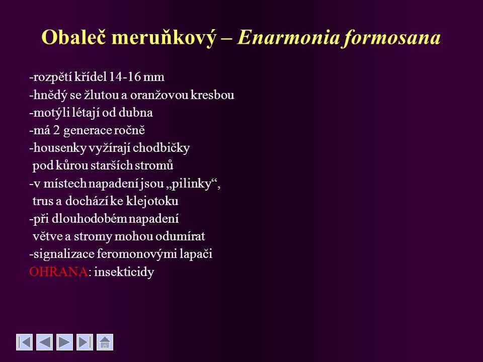Obaleč meruňkový – Enarmonia formosana