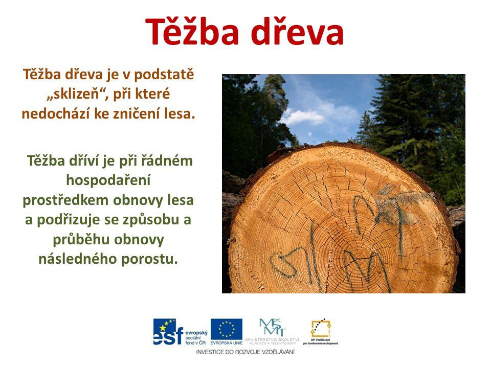 """Těžba dřeva Těžba dřeva je v podstatě """"sklizeň , při které nedochází ke zničení lesa."""