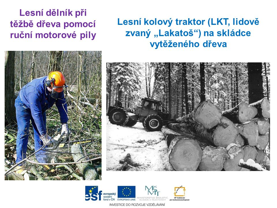 Lesní dělník při těžbě dřeva pomocí ruční motorové pily