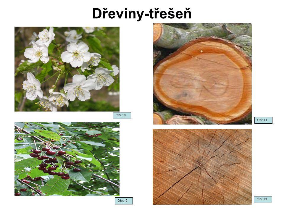 Dřeviny-třešeň Obr.10 Obr.11 Obr.12 Obr.13