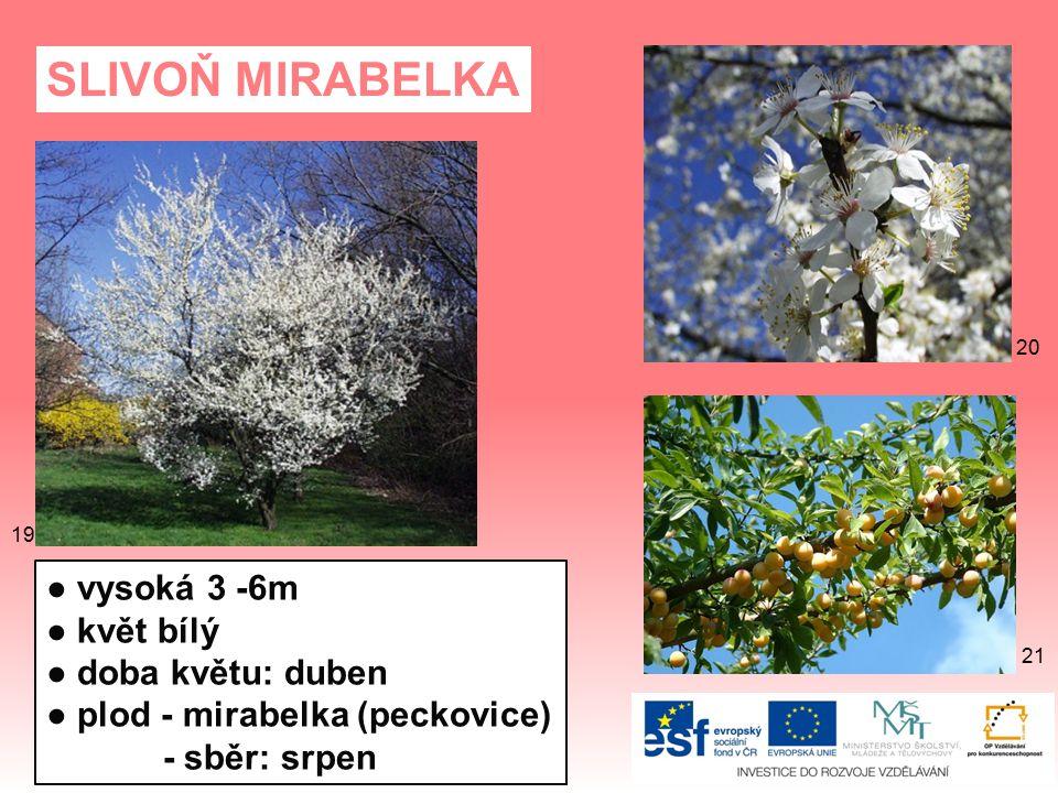 SLIVOŇ MIRABELKA ● vysoká 3 -6m ● květ bílý ● doba květu: duben