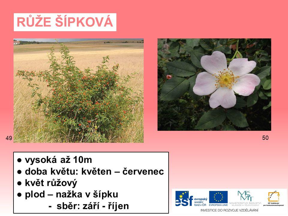 RŮŽE ŠÍPKOVÁ ● vysoká až 10m ● doba květu: květen – červenec