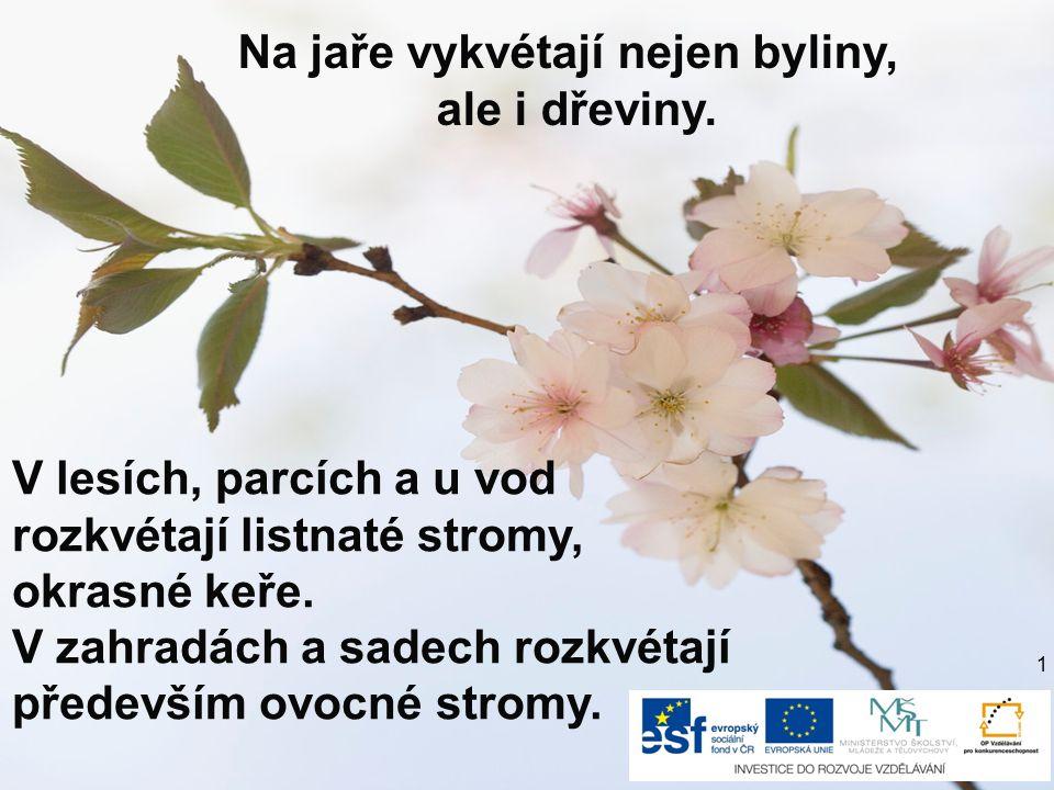 Na jaře vykvétají nejen byliny, ale i dřeviny.