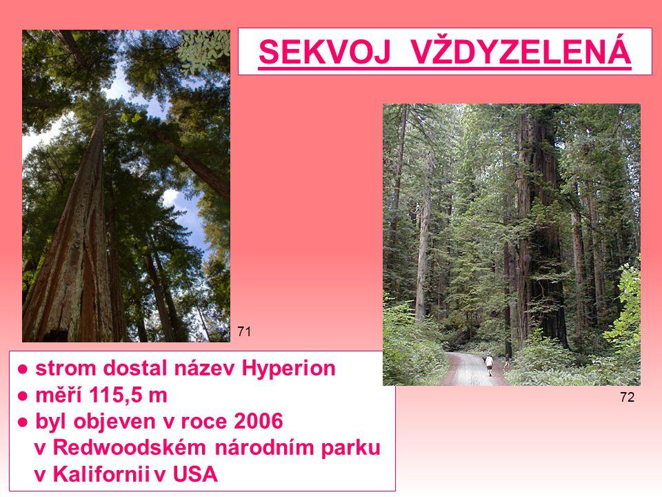 SEKVOJ VŽDYZELENÁ ● strom dostal název Hyperion ● měří 115,5 m