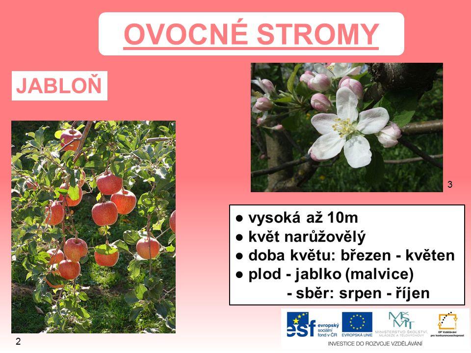 OVOCNÉ STROMY JABLOŇ ● vysoká až 10m ● květ narůžovělý