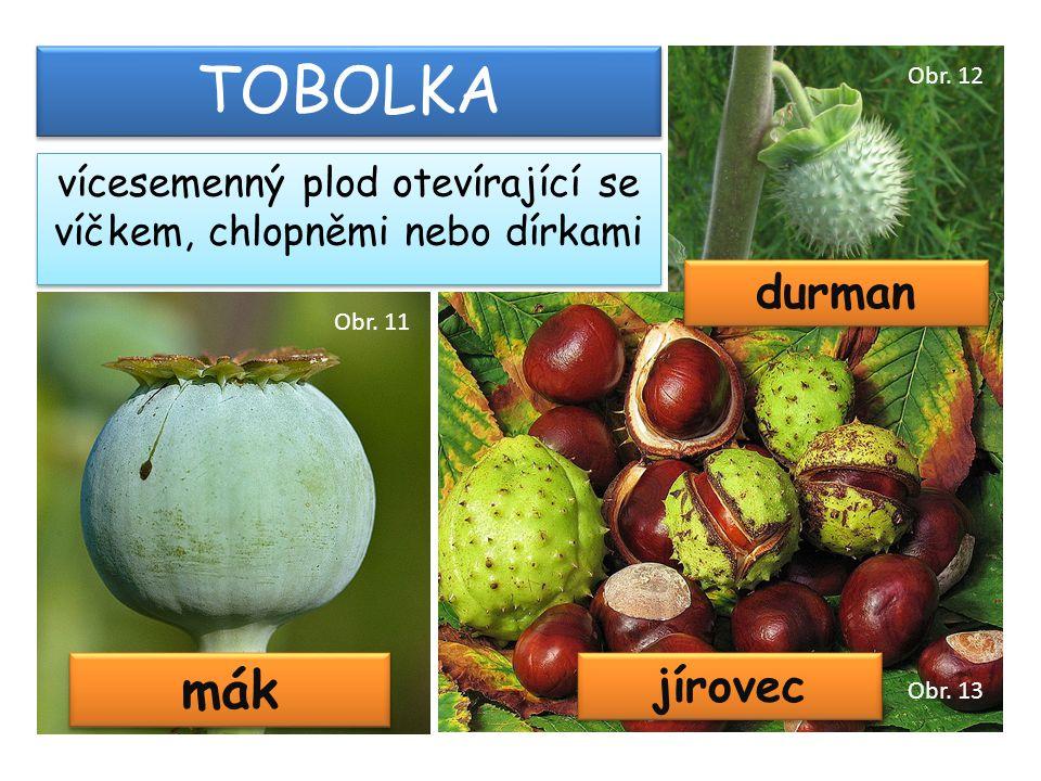 vícesemenný plod otevírající se víčkem, chlopněmi nebo dírkami