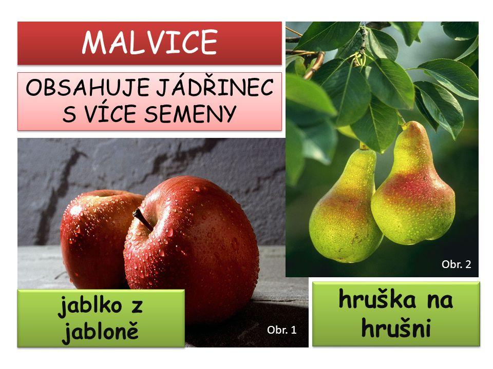 MALVICE hruška na hrušni OBSAHUJE JÁDŘINEC S VÍCE SEMENY