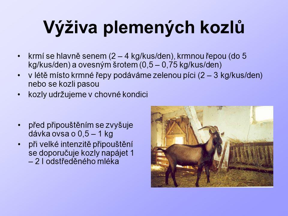 Výživa plemených kozlů