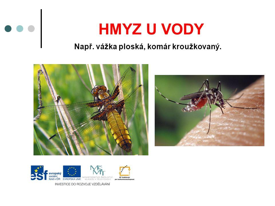Např. vážka ploská, komár kroužkovaný.