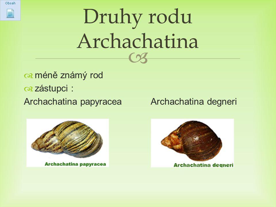Druhy rodu Archachatina