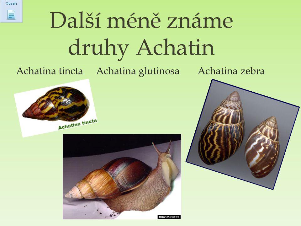 Další méně známe druhy Achatin