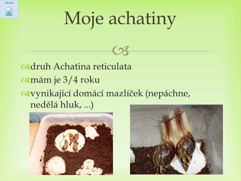 Moje achatiny druh Achatina reticulata mám je 3/4 roku