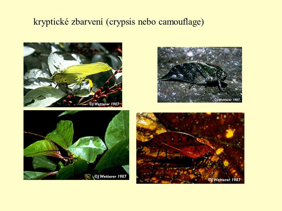 kryptické zbarvení (crypsis nebo camouflage)