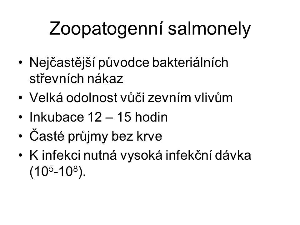 Zoopatogenní salmonely
