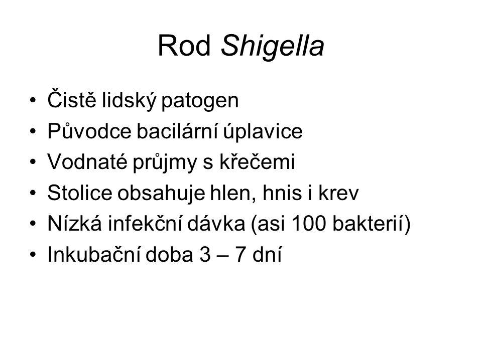Rod Shigella Čistě lidský patogen Původce bacilární úplavice