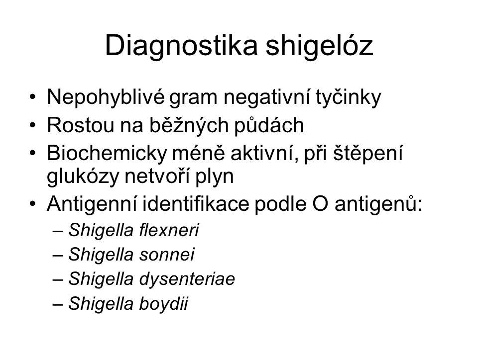 Diagnostika shigelóz Nepohyblivé gram negativní tyčinky