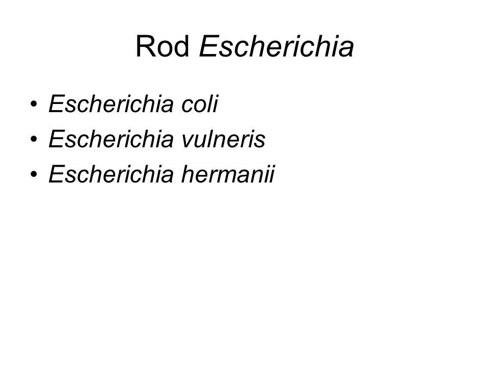 Rod Escherichia Escherichia coli Escherichia vulneris