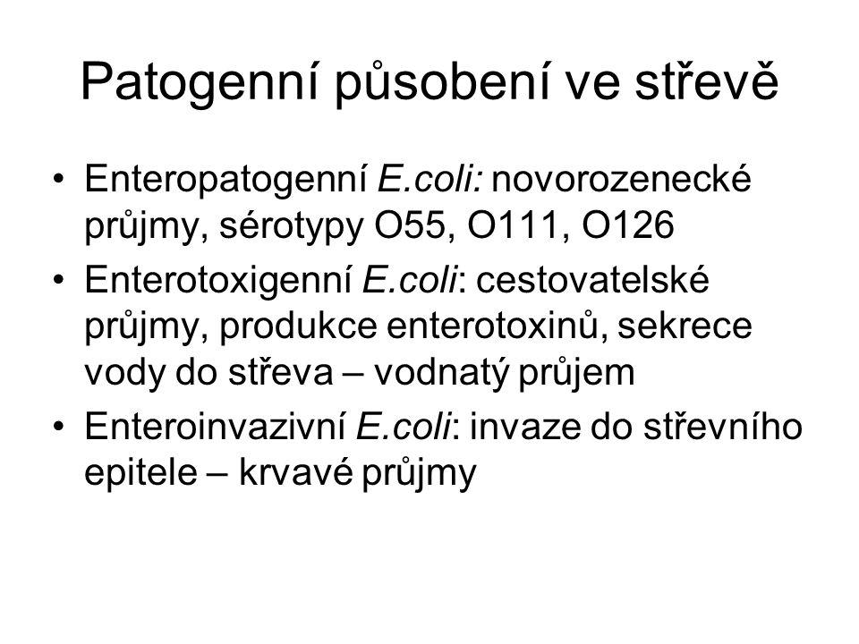 Patogenní působení ve střevě