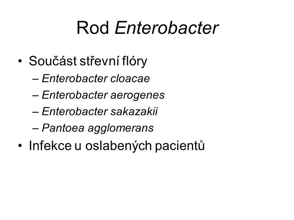 Rod Enterobacter Součást střevní flóry Infekce u oslabených pacientů