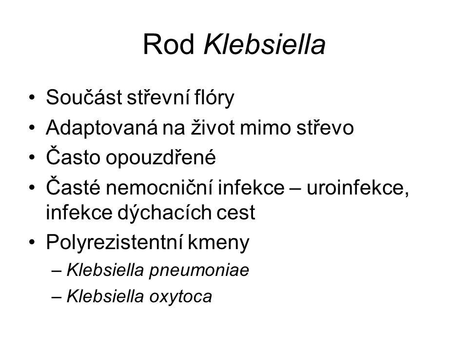 Rod Klebsiella Součást střevní flóry Adaptovaná na život mimo střevo