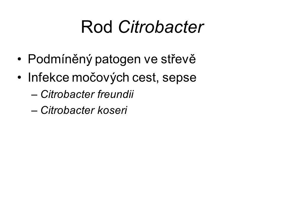 Rod Citrobacter Podmíněný patogen ve střevě