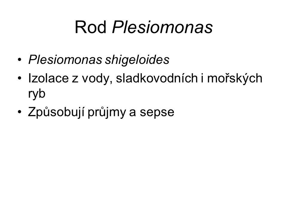 Rod Plesiomonas Plesiomonas shigeloides