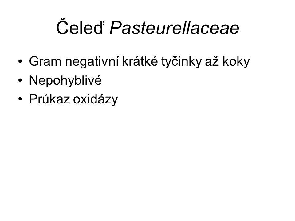 Čeleď Pasteurellaceae