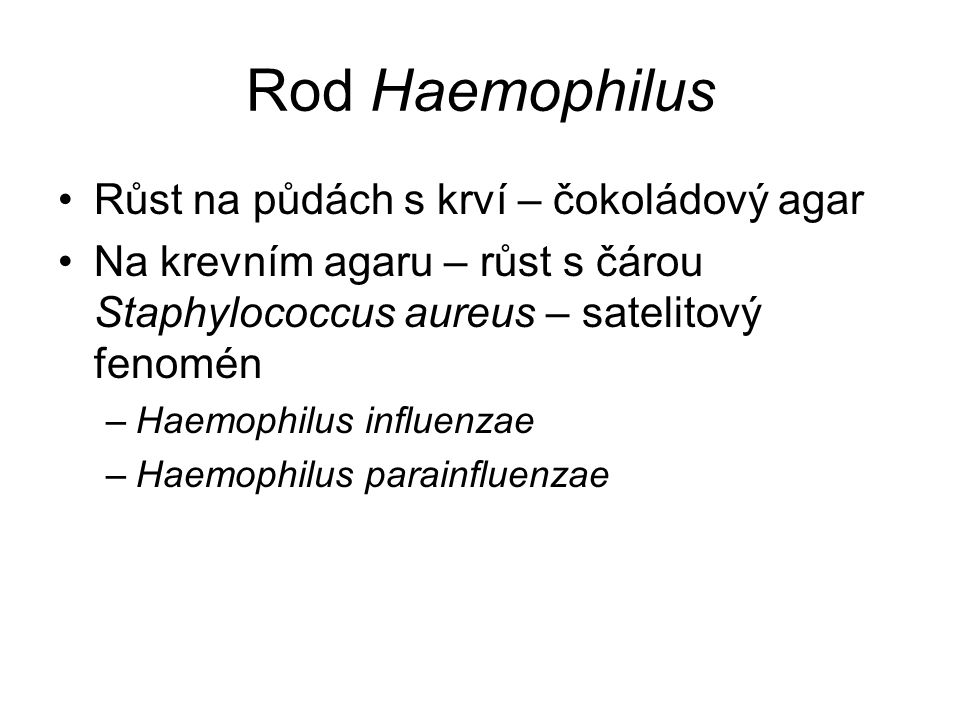 Rod Haemophilus Růst na půdách s krví – čokoládový agar