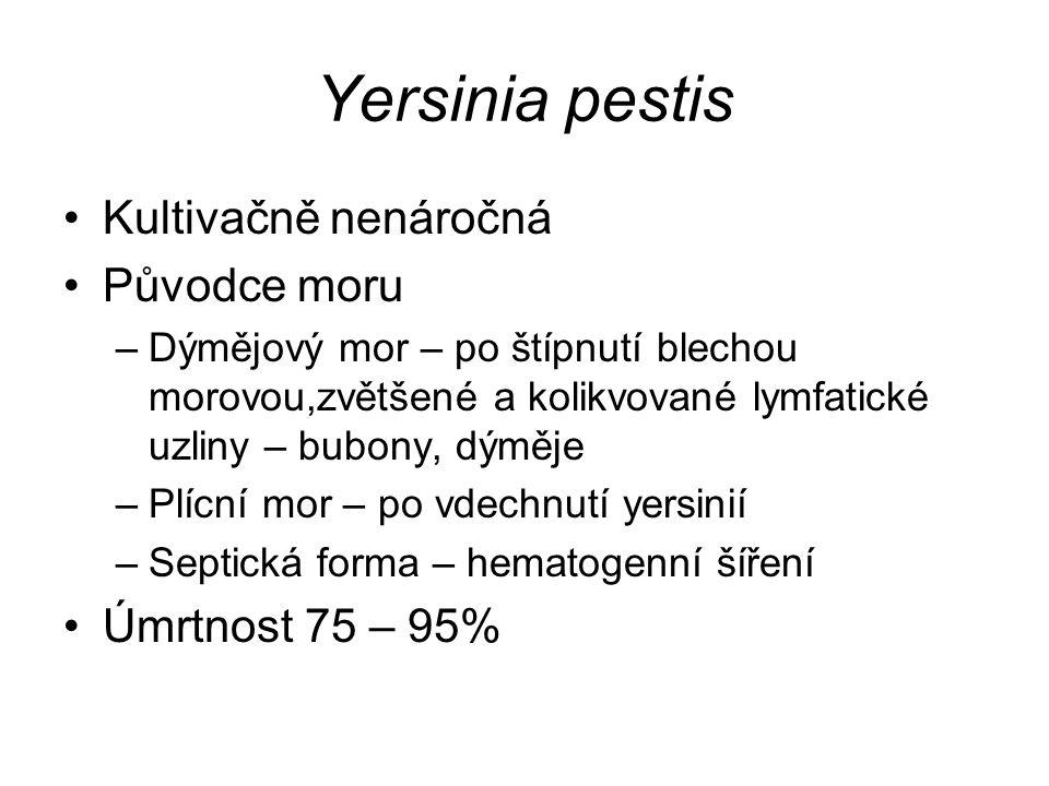 Yersinia pestis Kultivačně nenáročná Původce moru Úmrtnost 75 – 95%