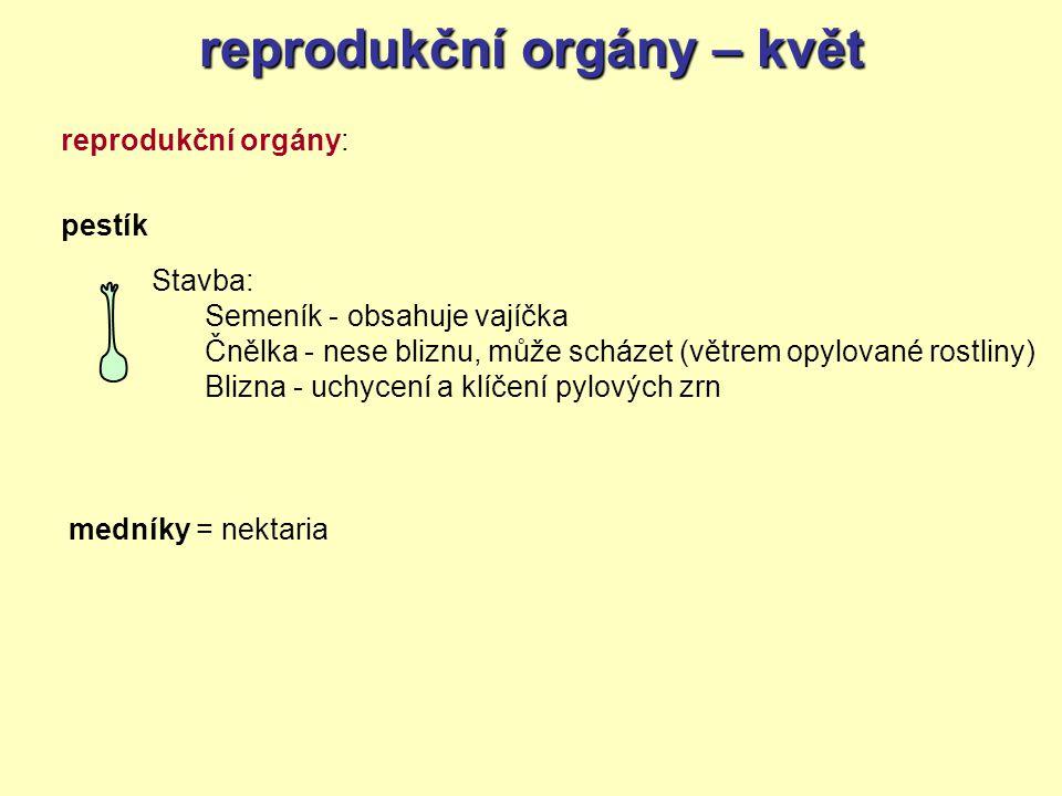 reprodukční orgány – květ