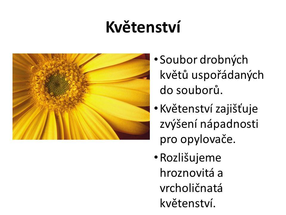 Květenství Soubor drobných květů uspořádaných do souborů.