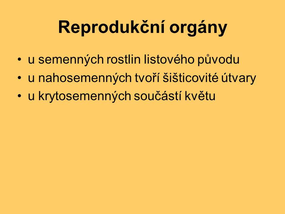 Reprodukční orgány u semenných rostlin listového původu