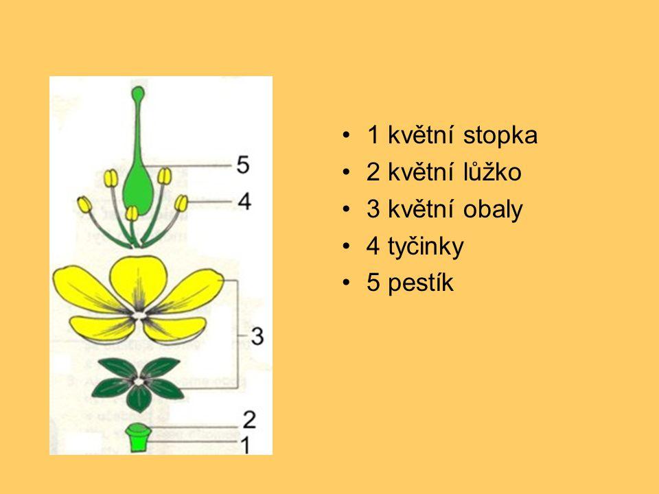 1 květní stopka 2 květní lůžko 3 květní obaly 4 tyčinky 5 pestík