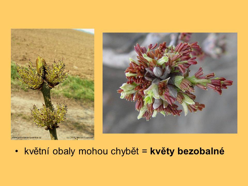 květní obaly mohou chybět = květy bezobalné