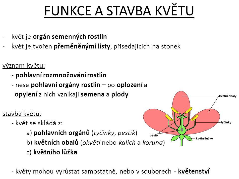FUNKCE A STAVBA KVĚTU květ je orgán semenných rostlin